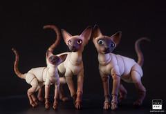 Cat Family! (BJD Pets (dolls.evethecat.com)) Tags: bjd bjds bjdsale bjdforsale bjdoll bjddoll bjdlover bjdphoto bjdart dolls evestudiodolls artdoll dollart cat bjdpets kitty cute bjdcat