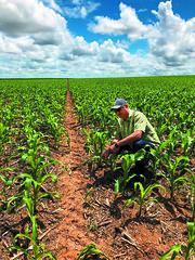 Agenor Mafra-Neto (ISCA Tech Media) Tags: corn armyworm brazil agenor splatfaw faw maize