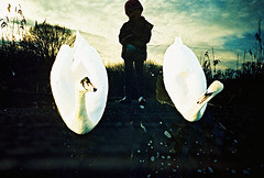 Lomo – The girl with the swans in her silhouette (lomomowlem) Tags: 35mm analogue bird crossprocess colourstreambrighton doubleexposure expiredfilm ebx kodakelitechrome lomo lomography lca lofi multipleexposure mxbutton swan silhouette water xpro xprocess