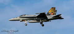 """Swiss Air Force F/A 18C Hornet """"Tiger"""" (Ratters1968: Thanks for the Views and Favs:)) Tags: canon7dmk2 martynwraight ratters1968 canon dslr photography digital eos frisianflag 2019 leeuwardenairbase holland netherlands dutch royalnetherlandsairforce exfrisianflag nato flight flying fleugzeug aeroplane plane aeronautics aircraft avions aviation avioes aeronef transport airplane air jet topgun military war warplane combat combataviation militaryaircraft militaire warbird bomber fighter fastjet swiss switzerland swissairforce hornet f18 mcdonnelldouglasf18hornet boeing boeingdefencespaceandsecurity fa18chornet panthers payerneairbase fliegerstaffel18 s tiger"""