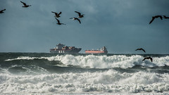 High Seas (AAcerbo) Tags: sanfrancisco california oceanbeach beach waves storm widescreen boat ship shipping cargo seagulls birds