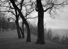 Trees along the Bluff, St. Joseph (mswan777) Tags: tree grass bluff water shore coast fog mist weather outdoor scenic nature michigan apple iphone iphoneography mobile monochrome black white ansel seascape cloud sky
