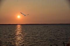 Sunset_Negombo_1