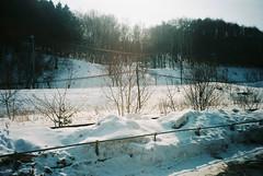 (埃德溫 ourutopia) Tags: film kodak ektar ektar100 canon canonprima canonprimaas1 filmphotography analog analogphotography tree roadside hill woods snow hokkaido japan フィルム 北海道 日本