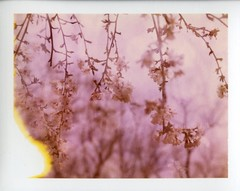 (er_code_blue) Tags: polaroidweek film packfilm analog instant 690 195 polaroid