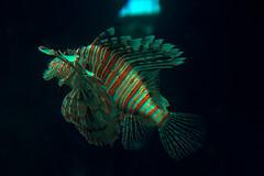 (Cindy en Israel) Tags: pez animal fauna aletas colores acuario eilat israel uno turismo travel tour viaje paseo