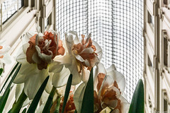 Fleurs (BenoitGEETS-Photography) Tags: fleur flower bloem a6000 sony bruxelles brussels galeriedelareine