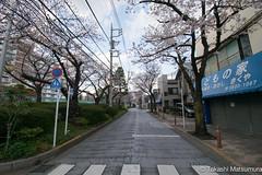 Arakawa Yuen Mae (takashi_matsumura) Tags: arakawa yuen mae arakawaku tokyo japan ngc nikon d5300 荒川遊園前 荒川区 東京 桜 cherry blossoms sakura afp dx nikkor 1020mm f4556g vr
