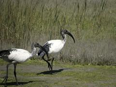 (Bruja Camilla) Tags: birds africa animals wildlife