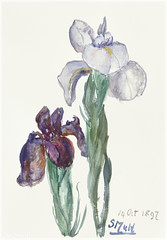 Painting by Sientje Mesdag-van Houten (Free Public Domain Illustrations by rawpixel) Tags: antique art artwork bloom blooming blossom botanical botany cc0 creativecommons0 decor decoration design flora floral flower fresh garden gardening historical history illustration image iris irises irissen lily natural nature old paint painting plant publicdomain purple retro sientjemesdagvanhouten sinamesdagvanhouten spring summer vintage white wild