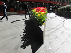 Spring Flowers Yellow and Red Tulips Wedge Shaped Planter 6908 (Brechtbug) Tags: spring flowers yellow red tulips springtime floral display wedge shaped sidewalk planter 50th street looking towards sixth avenue 6th ave nyc 2019 new york city 04242019 flower happy post easter holiday