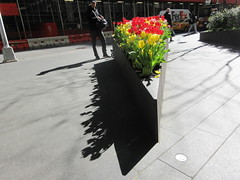 Spring Flowers Yellow and Red Tulips Wedge Shaped Planter 6907 (Brechtbug) Tags: spring flowers yellow red tulips springtime floral display wedge shaped sidewalk planter 50th street looking towards sixth avenue 6th ave nyc 2019 new york city 04242019 flower happy post easter holiday