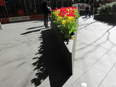 Spring Flowers Yellow and Red Tulips Wedge Shaped Planter 6906 (Brechtbug) Tags: spring flowers yellow red tulips springtime floral display wedge shaped sidewalk planter 50th street looking towards sixth avenue 6th ave nyc 2019 new york city 04242019 flower happy post easter holiday