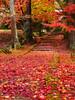 京都龍穏寺      Kyoto Ryuonji Temple (Eiki Wang) Tags: りょうおんじ なんたんし kyoto sonobe nantan fall autumn momiji ryuonjitemple ryuonji temple 京都 南丹 園部 楓 紅葉 龍穏寺 關西