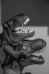T-Rex  Test Shot (Alvimann) Tags: alvimann kid kids niño niños trex tiranosaurusrex tiranosaurus rex tiranosauriorex tiranosaurio black blackandwhite blanco blancoynegro