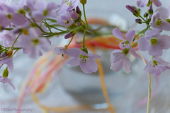 Ostersträußchen (Fay2603) Tags: blumen flowers fiori fleurs blossom blüte wiesenschaumkraut kräuer wildkräuter herbs schleife lila violett zart fein fuji fujifilm fujixt1 stamens staubgefäse makro macro