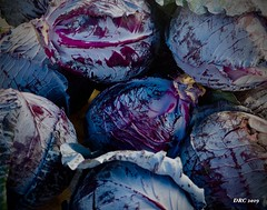 red cabbage at the Farmers Market at Coconut Point (DRC - THANKS for 3.4 Million Views) Tags: purple blue cabbages vegetables market estero florida food farmersmarket shopping coconutpoint mall olympus omdem5ii