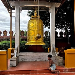 Resting under the grace of the golden bell_IMG_4396r_01