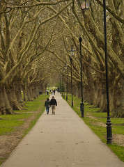 Photo of Tree lined Avenue