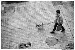 .. (Matías Brëa) Tags: street calle photography blanco y negro black white bnw personas people gene mono monocromo monochrome perro dog