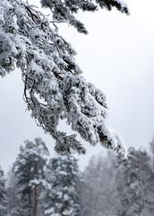 DSC09569 (Дмитрий Панкратьев) Tags: деревья лес природа снег
