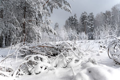 DSC09566 (Дмитрий Панкратьев) Tags: деревья лес природа снег