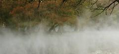 LA NIEBLA. (NIKONIANO) Tags: niebla mist fog camécuaro michoacán méxico mistymorning vaporización vidaenellago
