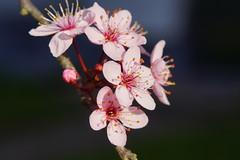 _DSC4754 (wdeck) Tags: spring frühling tamron