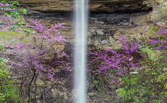 Red Bud Falls (Bernie Kasper (5 million views)) Tags: art berniekasper bloom cliftyfallsstatepark color cliftyfalls colour d750 family flower floral flowers fun green hiking home indiana indianawildflowers jfdlaniermansion light landscape leaf leaves love longexposure madisonindiana macro madisonindianacliftyfallsstatepark nature nikon naturephotography new outdoors outdoor old outside photography plant park plants photos photo raw red redbudtree sigma spring statepark travel trail tree trees unitedstates usa