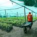Vivero comunal para restauración de bosques del Programa Bosques Manejados en el distrito de Curahuasi, Apurímac.