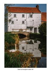 Swan at Alvingham Water Mill (Mallybee) Tags: fuji fujifilm xt30 mallybee swan bird reflections water mill alvingham lincolnshire 1545mm f3556 ois pz zoom outside landscape