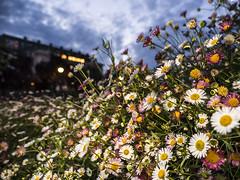 P4180210 (asferic) Tags: catalunya catalonia barcelona montjuich miramar flora