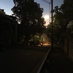 Light and shadow play on lanes at sunset in Glebe, Sydney - #lightandshadowplayonlanes #light #shadow #lane #Sydney #Glebe #urbanstreet #urbanfragments #urbanandstreet #streetphotography #trees #car #biketaillight #bike #sunset #dusk (TenguTech) Tags: ifttt instagram lightandshadowplayonlanes light shadow lane sydney glebe urbanstreet urbanfragments urbanandstreet streetphotography trees streetlight bike duck sunset car