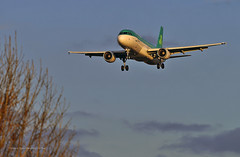 Aer Lingus at Sunset (Infinity & Beyond Photography: Kev Cook) Tags: aer lingus irish airlines airbus a320 aircraft airplane airliner london heathrow airport lhr myrtle avenue ave photos planes sunset goldenhour