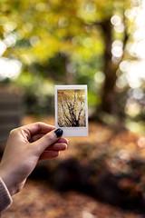 Polaroid Fall (Photos By Dlee) Tags: sonyalphaa7iii sonya7iii sonya73 sony sonyalpha mirrorless fullframe fullframemirrorless tamron2875mmf28diiiirxd tamron zoom tamron2875mmf28 photo photosbydlee photography australia sydney newsouthwales nsw autumn fall seasons bluemountains nature