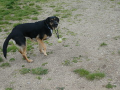 P1060404 (jesust793) Tags: perros dogs animal mascota primavera pet