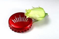 IMG_6282_p_g (thebiblioholic) Tags: 365 flower bud budweiser bottlecap closeup