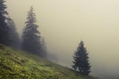 Into the great wide open (Netsrak) Tags: at alpen alps baum bavaria bayern berg bäume eu europa europe landschaft natur nebel wald fog landscape mist mountain nature woods