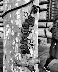 """""""L' ALBERTO DELLA VERITÀ!"""" CIX /16 #artcontemporary #urban #photography #photographer#fotografiaartistica#photooftheday #photographers #artphotography#fotografia#photoart#photo #city #arte #artecontemporanea #arteconcettuale #conceptual_art_gallery#artgal (paolomarianelli) Tags: city paolomarianelli artphotography artwork photographers arteconcettuale urbex photooftheday conceptualartgallery fotografiaartistica artcritics artistcommunity arte artecontemporanea artcontemporary urbexphoto photography artist fineartphotobw urban photo artgallery street photoart fotografia photographer exit air curator travel"""