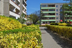 Spring in the town :) (green_lover (I wait for your COMMENTS!)) Tags: town housingestate buildings architecture hometown żyrardów poland spring forsythia blossom bushes