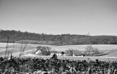 Niederösterreich Weinviertel Obergänserndorf_DSC0293SW (reinhard_srb) Tags: niederösterreich weinviertel obergänserndorf landschaft artowrk kellergasse weinkeller presshaus felder acker hügel sanft winter bäume wald