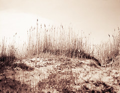 Klitter og græs (LarsHolte) Tags: pentax 67 6x7 pentax67 pentax6x7 smctakumar6x7 135mm f40 foma fomapan fomapan100 fomapan100professional caffenolc 100iso mediumformat blackandwhite monochrome bw 120film analog analogue classicblackwhite filmforever filmphotography ishootfilm larsholte homeprocessing denmark danmark nivå nivåstrand strand beach grass
