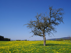 morning walk 19-04-2019 001 (swissnature3) Tags: switzerland nature tree flowers countryside algetshausen