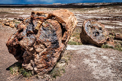 Timeless Trees (SteveCoylePhoto) Tags: ancient petrifiedforestnationalpark nationalpark trunk petrified clouds quartz trees blue rocks grass storms showers forest crystalforest sky unitedstates arizona wood painteddesert colors