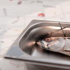 Mackerel (annick vanderschelden) Tags: mackerel fish food protein gutted recipient stainlesssteel kitchen blackboard chalk word plank wood culinary foodsafe cooled storage inox belgium