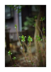 2019/3/16 - 15/15 END. photo by shin ikegami. - SONY ILCE‑7M2 / Voigtlander NOKTON CLASSIC 40mm f1.4 SC VM (shin ikegami) Tags: asia sony ilce7m2 sonyilce7m2 s7ii 40mm voigtlander nokton nokton40mmf14sc tokyo photo photographer 単焦点 iso800 ndfilter light shadow 自然 nature 玉ボケ bokeh depthoffield naturephotography art photography japan earth