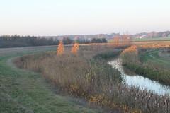 Evening sun on two trees (BernardusM) Tags: eveningsun drenthe derunde autumn