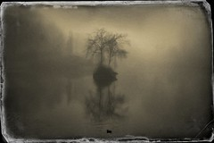 Island (Bill Eiffert) Tags: island soft pictorial modernpictorialism emotion feeling nature trees water reflection melancholy longing dreamscape personal