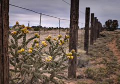 Fence and Cactus (zuni48) Tags: fence cactus southwest newmexico santafe ranch scenery