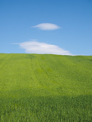 P4170064-2 (Mario (⌐■_■)) Tags: nature sky filed green blue olympus mft m43 em1 omd sunny rural outdoor